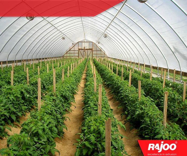 #Didyouknow -   A greenhouse consists of a frame made of wood, metal or plastic that is covered with a transparent or translucent material to allow in light. The walls might be opaque. A fan is usually included to increase air circulation and keep temperatures even.  #Greenhouse