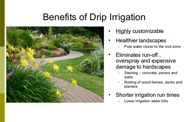 #DripIrrigation can be highly effective, here's how!