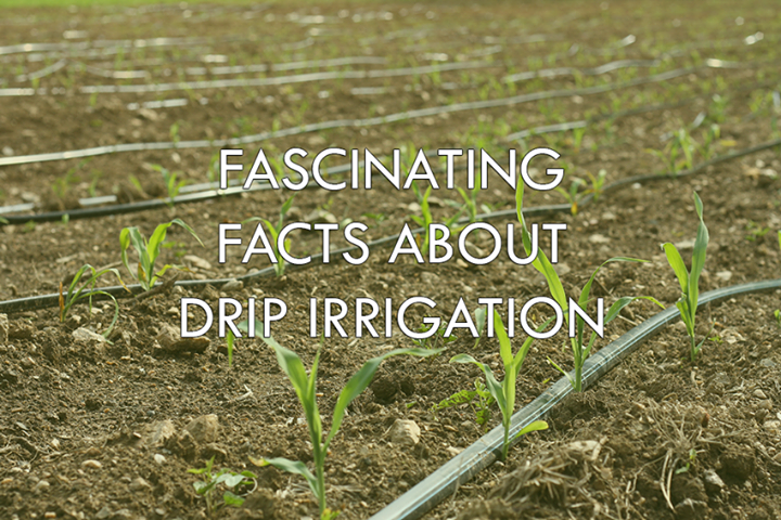 // Fascinating Facts About Drip Irrigation //  > Drip irrigation saves you time and money: a drip system can access the garden and nourish your plants. This simplified technique saves water, which minimizes your utilities. It also requires no active supervision.   > Less is More. This is the secret to good absorption rates. Drip tubing/tape should be kept at a steady water pressure level, but never set them high enough to openly spray.  > Spacing and Timing Matter. As with any watering system, timing is essential. But especially with drip irrigation, the spacing of each drip line determines the allocation of water in your garden. Check the absorption rate of your soil and adjust the frequency accordingly.   #DripIrrigation #RajooEngineers #Water #SaveWater #EffectiveUsage