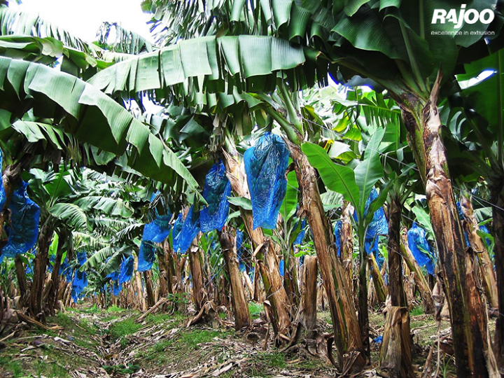 Taking #agriculture to the next level with agriculture Banana Bags!  #Multifoil #RajooEngineers #ManyUsesofPlastics..