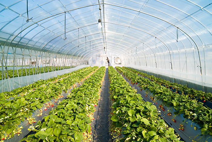 The greenhouse effect is a natural process that warms the Earth's surface. When the Sun's energy reaches the Earth's atmosphere, some of it is reflected back to space and the rest is absorbed and re-radiated by greenhouse gases.  Greenhouse gases include water vapor, carbon dioxide, methane, nitrous oxide, ozone and some artificial chemicals such as chlorofluorocarbons (CFCs).  The absorbed energy warms the atmosphere and the surface of the Earth. This process maintains the Earth's temperature at around 33 degrees Celsius warmer than it would otherwise be, allowing life on Earth to exist.  #Greenhouse #RajooEngineers #Rajkot