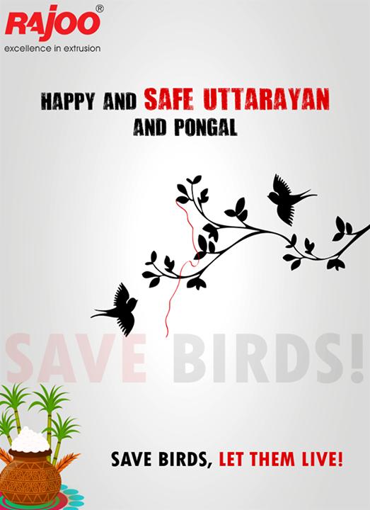 Have a safe #festiveseason ahead!   #HappyUttarayan #SaveBirds #Pongal #Surat #FestiveSeason #IndianFestivals