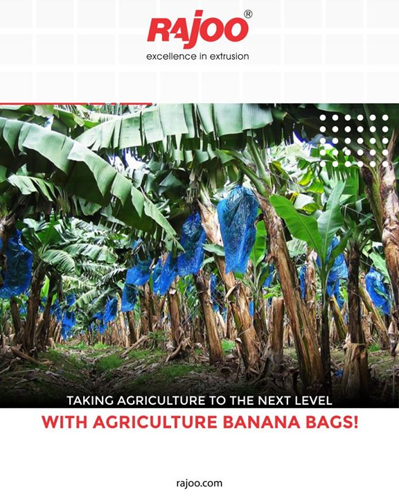 Taking #agriculture to the next level with agriculture Banana Bags!  #Multifoil #RajooEngineers #ManyUsesofPlastics #Rajkot #PlasticMachinery #Machines #PlasticIndustry